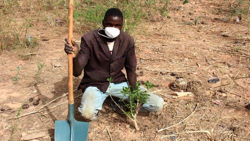 プロジェクト・サイトに生育するバオバブの木(2015年11月)